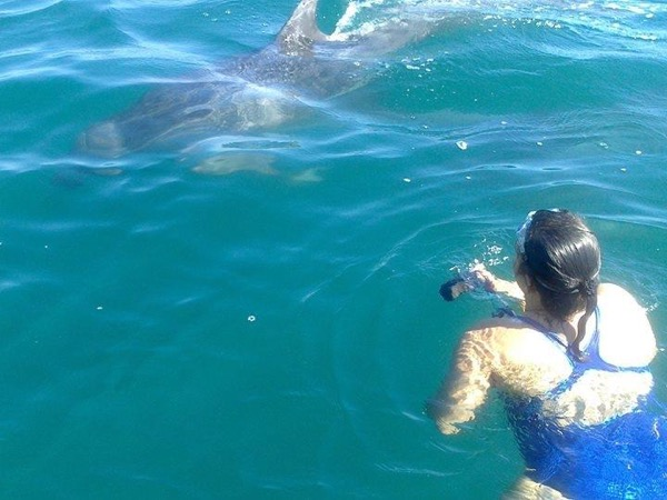 A Playful Encounter with Wild Dolphins in Puerto Vallarta