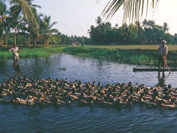 Private Tour in and around Cochin - Sightseeing Monuments & Kumbalangi Model Tourism Village