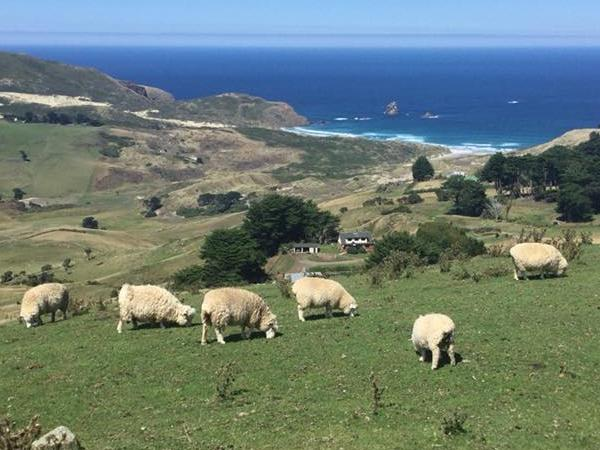 Otago Peninsula & Dunedin Half-day Tour