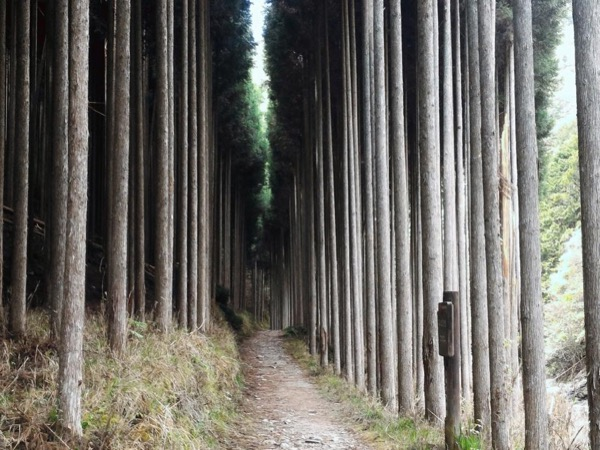 Takao to Arashiyama hike - a Private Day Tour on the outskirts of Kyoto