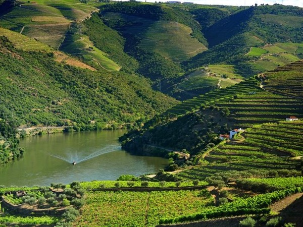 Shore Excursion to Douro valley, Rebelo Cruise Pinhão with wine tour & tasting