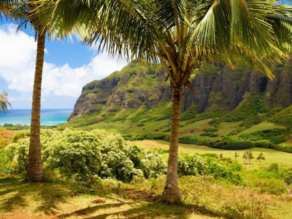 Private Tour of Famous Oahu Film Sites