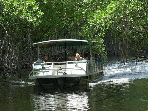 Black River Safari - YS Falls & Pelican Bar