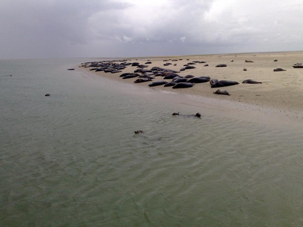 Flowerfields, Island of Texel and Seals Private Tour