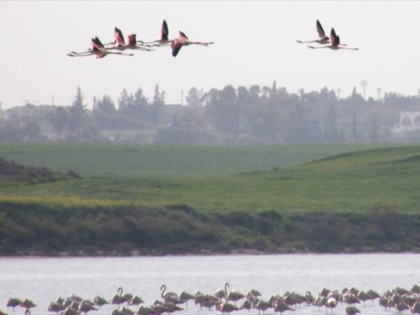 Larnaca Salt Lake and Oroklini Lake Birdwatching Private Tour