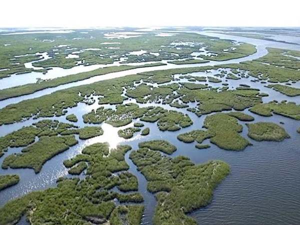 New Orleans and Swamp Walking Private Tour