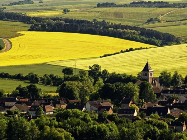 Chablis/Burgundy Tour (13 hours)