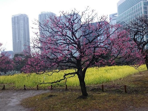 Hama Rikyu Japanese Garden and River Cruise to Asakusa or Odaiba