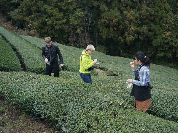 A private tour to Uji Green Tea farm in Kyoto