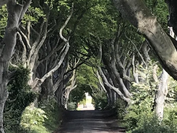 Game Of Thrones Tour- A Private Day Trip out of Belfast