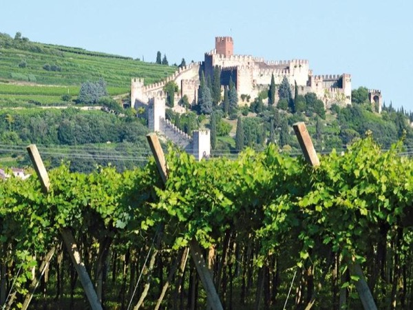 Soave wineries tour - from Venice, with lunch in a typical