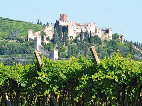 Soave wine tour with lunch, trasport and visit of the Medieval Castle
