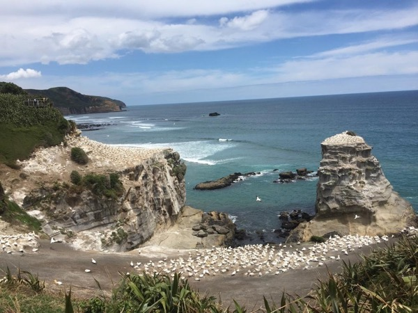 Wild West Coast - Half Day Private Tour from Auckland
