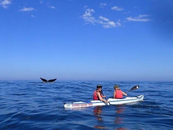 VIP Two Day Whale Watching, Sea Kayaking, Basilica, Private Car Tour