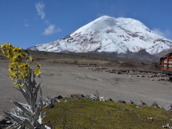 Chimborazo Natural Reserve Full Day Tour from Quito