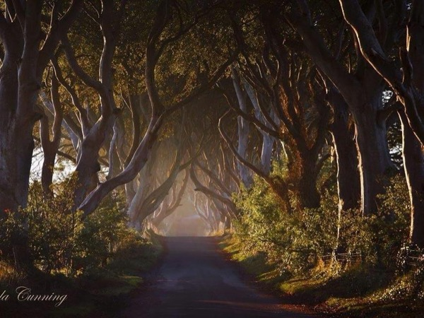 Dark Hedges and Giants Causeway Private Tour