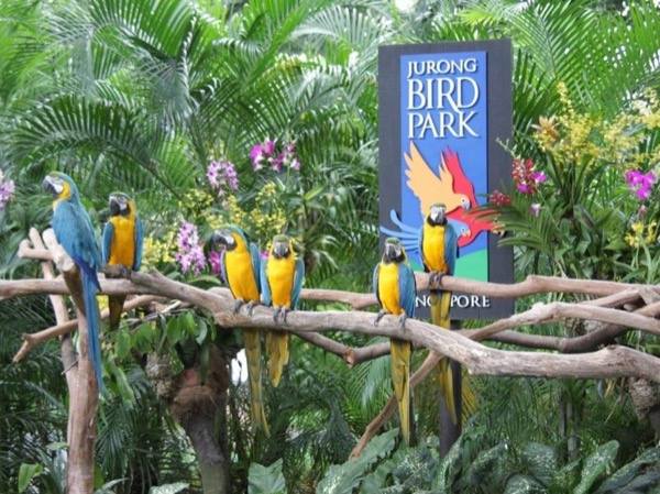 Private Half Day Jurong Bird Park Tour
