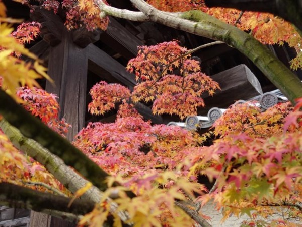 A Day in the Exquisite Atmosphere of Kyoto