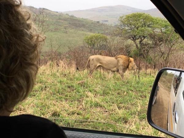Hluhluwe-iMfolozi National Park Full Day Tour Safari - 1