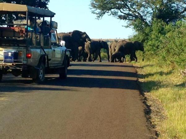 Hluhluwe-iMfolozi National Park Full Day Tour Safari - 2