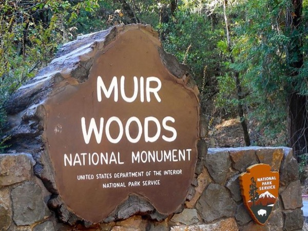 7 hour private tour - Muir Woods, Mill Valley, Tiburon, San Francisco and Sausalito - fun tour in a luxury sedan