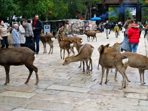 Nara sightseeing guided tour