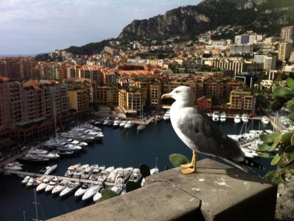 See Everything of the Riviera in a Day ! Monaco - Eze - Nice - Antibes - Saint-Paul de Vence - Cannes
