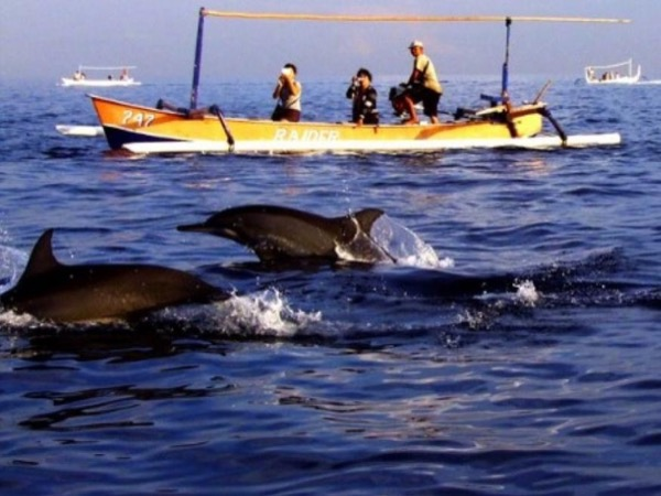 Bali Dolphin Watching and Git-Git Waterfall - Private Tour to Explore North Coast of Bali