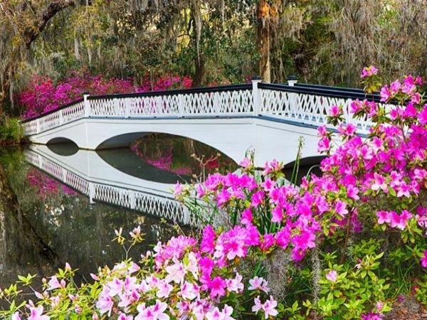 Private motorized Magnolia Plantation and Charleston City Tour