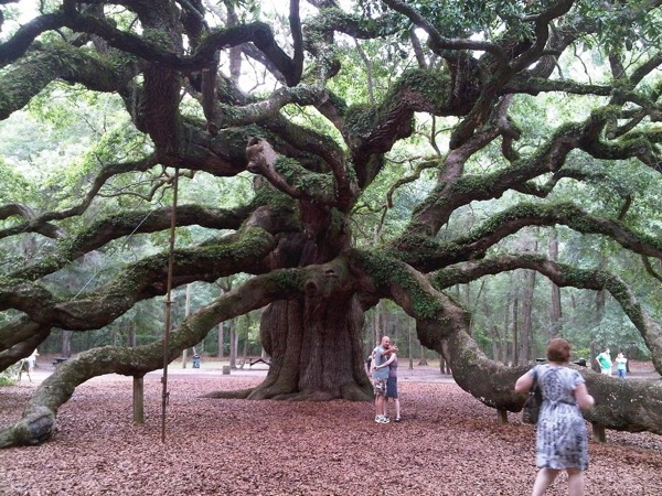 Private Angel Oak visit and Private Walled City Tour