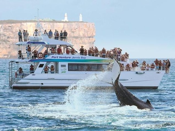 Private Tour to Jervis Bay with dolphin watch cruise, blowholes, magnificent coastal views and the whitest beaches in Australia