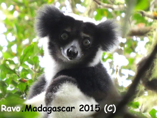 Madagascar, Two days Private Tour for history and for lemurs - With accommodation