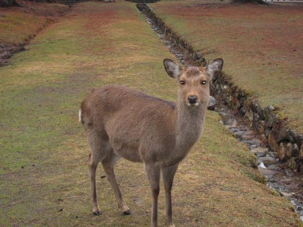 Nara Highlights - Private Tour