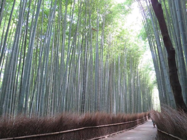 Kyoto Highlights - Private Tour - full day