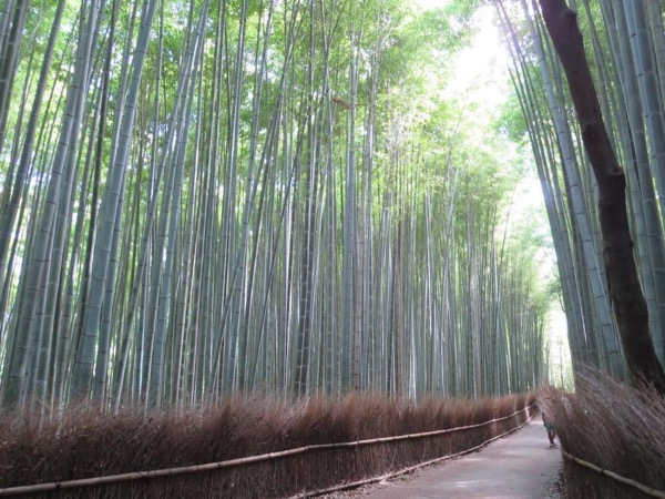 Kyoto Excursion from Osaka - Private Tour