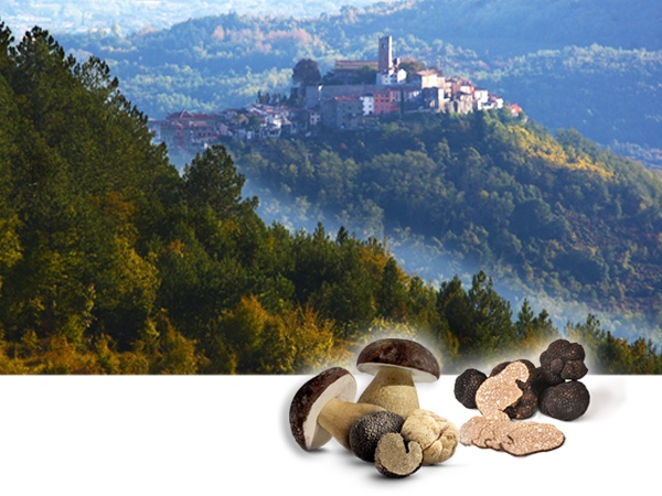 Truffle Hunting & Wine Tasting in Istria (VIP Small-group day tour)