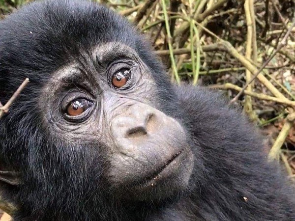 3 Days Gorilla Safari in Bwindi National Park
