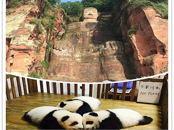 Panda and Leshan Buddha Full-Day Tour