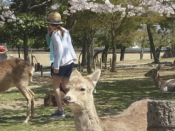 Private tour guide Koichi