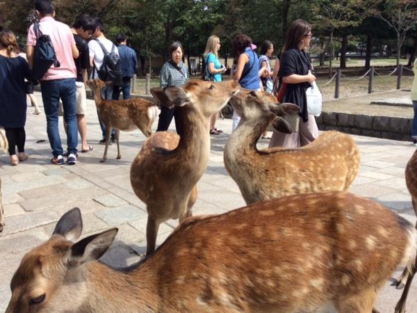 One-day Nara tour from Kyoto with a private guide