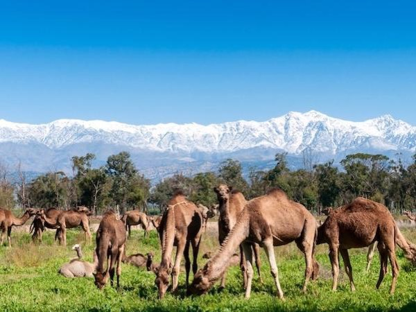 Imperial Cities Tour From Casablanca with accommodation.