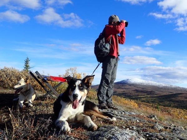 Full Day Dog Trekking - A Private Tour Near Whitehorse