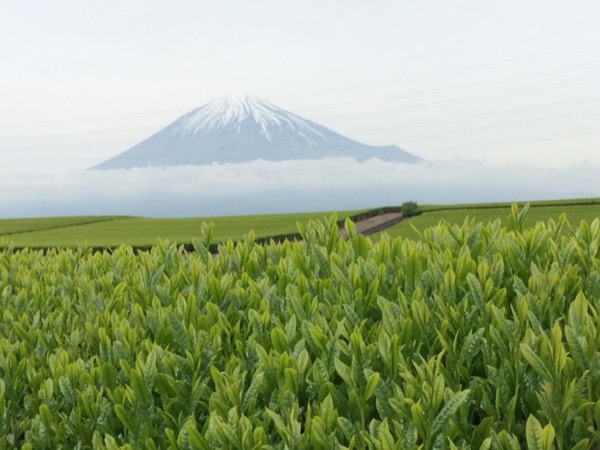Private Tour to enjoy blessings of Mt. Fuji