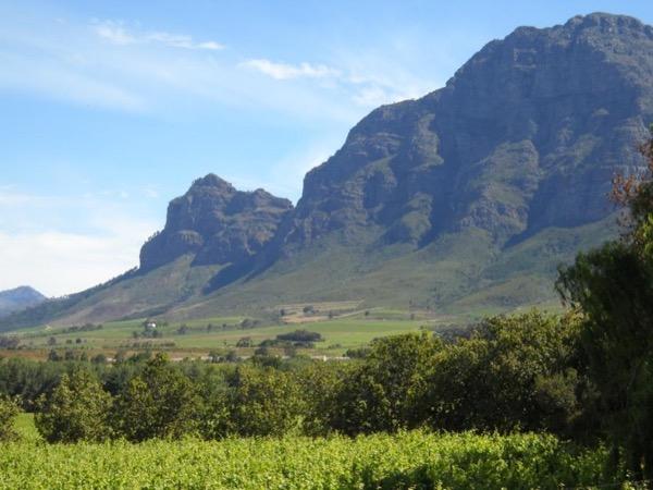 Private Tour - Fabulous Half Day Winelands Trip
