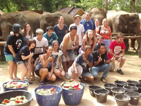 Elephants wander tours.
