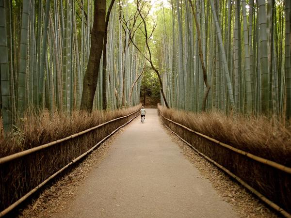 Arashiyama Half Day Private Tour (Tenryuji Temple, Okochi-sanso Villa, Bamboo Path)