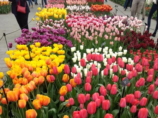 Early morning Aalsmeer Flower Auction, Keukenhof Gardens and Flower Fields Tour