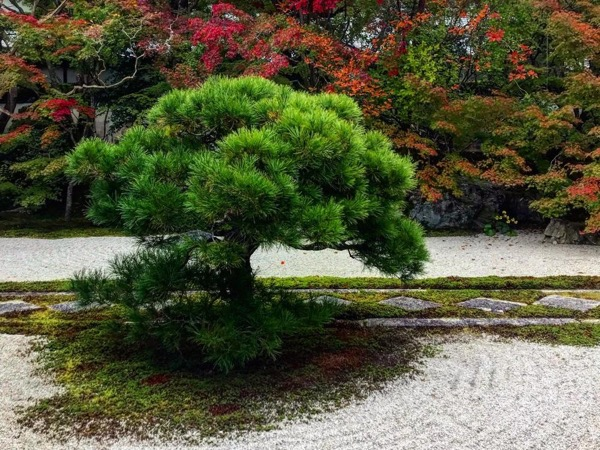 Zen Garden, Zen Mind (Half-Day Tour)