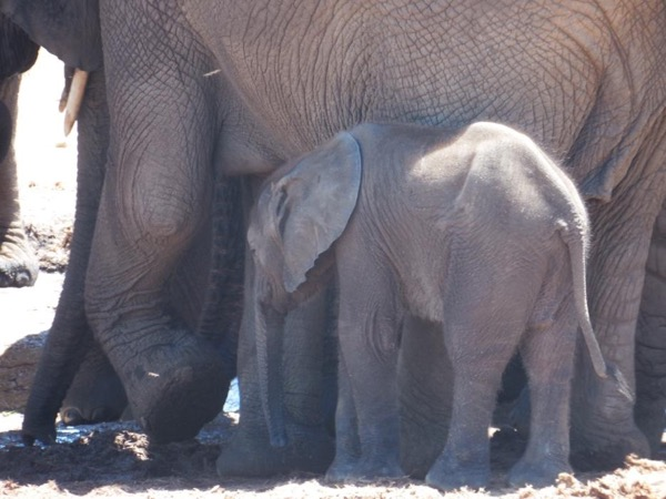 Addo Elephant National Park Private Tour