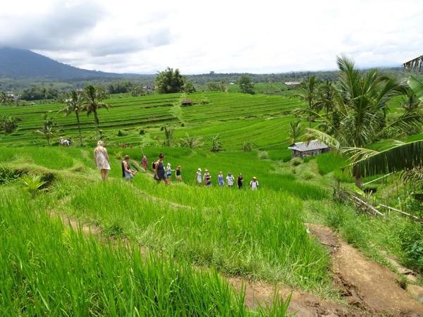 Cultural Landscape of Bali Tour
